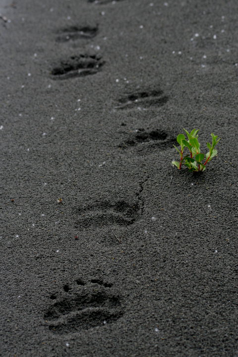 Bear Tracks on the Copper River near Cordova, Alaska