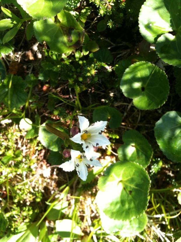 Wild Flowers in Cordova Alaska